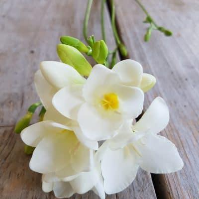 Evlenme Teklifi Çiçekleri Frezya
