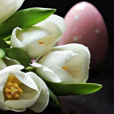 Evlenme Teklifi Çiçekleri Beyaz Lale