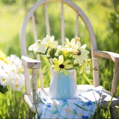 Evlenme Teklifi Çiçekleri Papatya