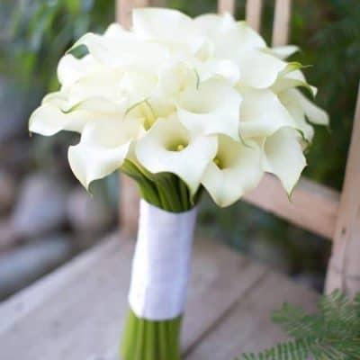 Beyaz Gelin Çiçeği Modelleri