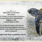 WWF Nikah Şekeri